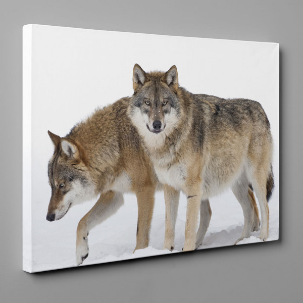 2 Gray Wolves In The Snow Canvas Wall Art