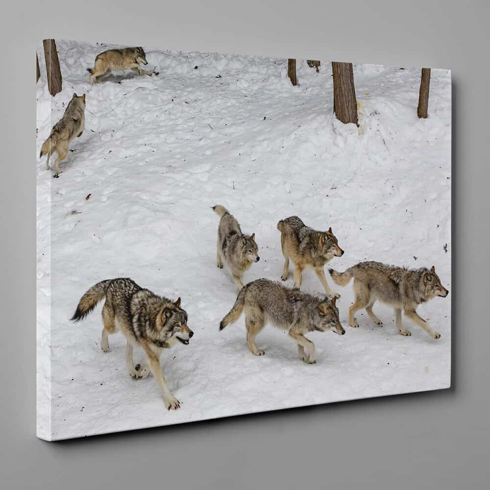 a pack of 7 wolves walking in the forest snow canvas wall art