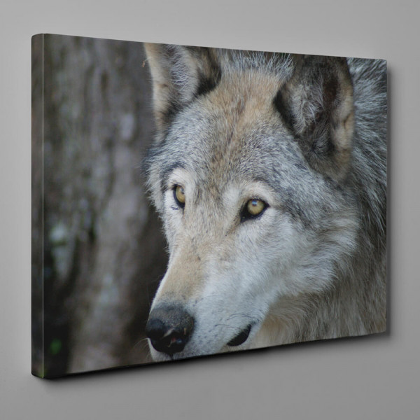 Wolf With Yellow Eyes - Close Up Canvas Wall Art