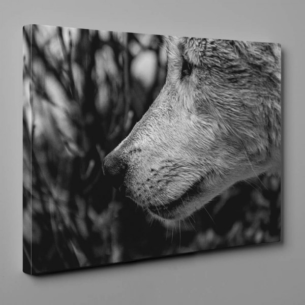 Black And White Wolf - Close Up Canvas Wall Art