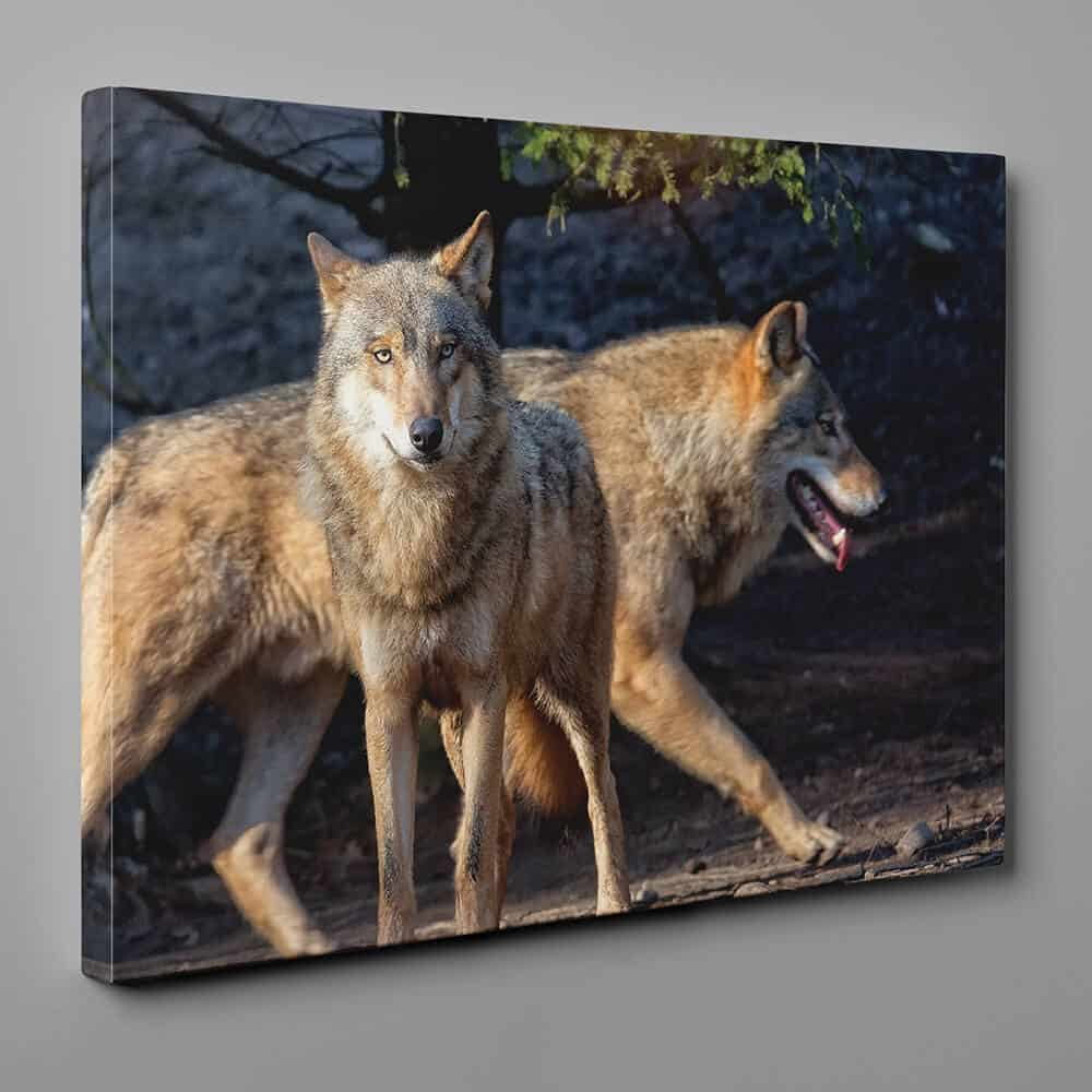 Brown Wolves Walking In The Wood Canvas Wall Art