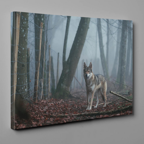 Brown and White Wolf In The Wood Canvas Wall Art