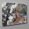 Iberian Wolf Resting In The Mountains Canvas Wall Art
