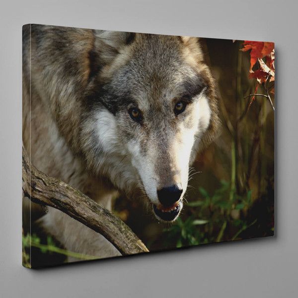 The Stare Of The Wolf Canvas Wall Art
