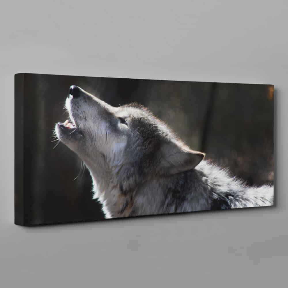 A Gray Wolf Howling Canvas Wall Art