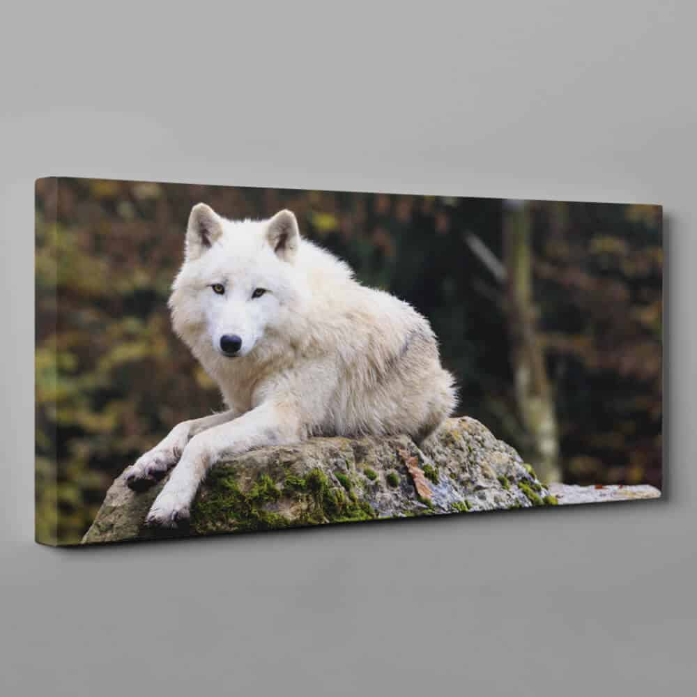Arctic Wolf Canvas Wall Art