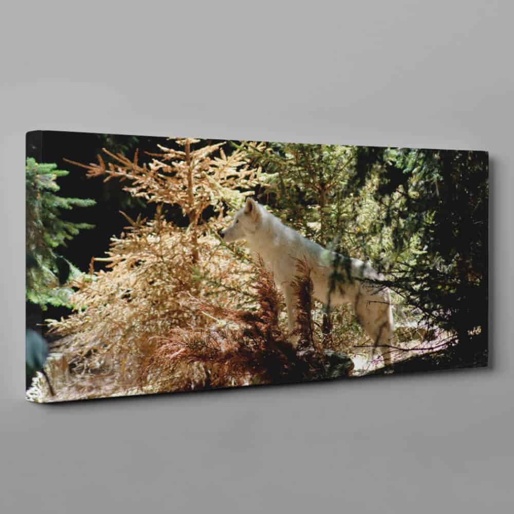 Arctic Wolf In Forest Canvas Wall Art – Wolf Wall Art